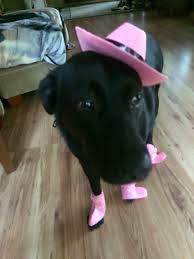 i do not like dressing up for halloween remington the best dog