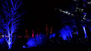 tree lights at the morton arboretum 2014 illumination tree lights at the morton arboretum youtube