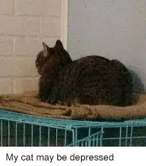 Depressed Cat Meme - my cat may be depressed cat meme on me me
