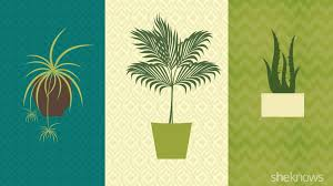 infographic best spots for your houseplants