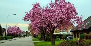 albero giardino alberi ornamentali da giardino e sempreverdi