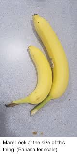 Banana For Scale Meme - man look at the size of this thing banana for scale funny meme