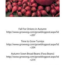 Fall Vegetable Garden Plants by Fall Vegetable Garden Plants For Sale Lovely Fall Winter Growing