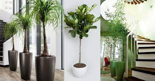 best low light indoor trees indoor trees quality dogs