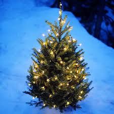 Christmas Tree Collection Edinburgh Council