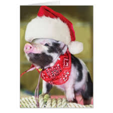 christmas pig santa pig christmas gifts t shirts posters other gift