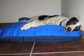 biggest bed ever biggest dog bed in the world best tallest dog ideas on dog beds and