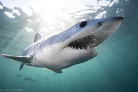 cape cod shark diver blog