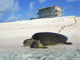 imagenes tortugas verdes venezuela ciencia y trabajo con comunidades protegen a las tortugas