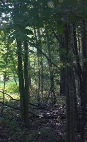 Northern Michigan Wikipedia by Sherwood Michigan Wikipedia