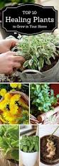 10 Vegetables U0026 Herbs You by Best 25 Best Herbs To Grow Ideas On Pinterest Gardening In
