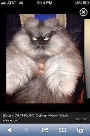 Colonel Meow Memes - 40 best colonel meow r i p images on pinterest cats