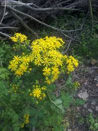 native indiana plants native and wild plants indiana plants in the woods help on ids