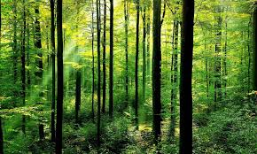 forests november 2017 browse articles forest habitat habitats wwf