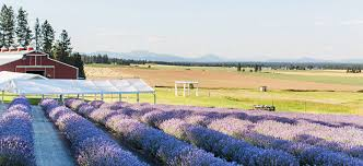 wedding venues spokane lavender manor a wedding and event venue