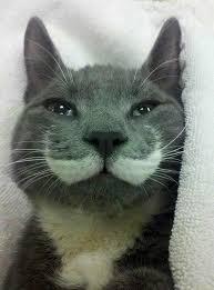 Handlebar Mustache Meme - pretty sweet handlebar mustache imgur