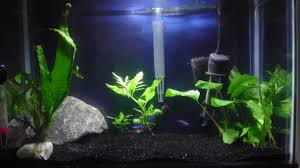 Aquascape Chicago Home Design Wonderful Aquarium Aquariumartis Bold Coarser Simple