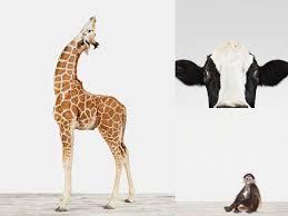 another donkey design awww u2013 the animal print shop