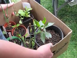 Vegetable Container Garden - vegetable container gardening for beginners u2013 erikhansen info
