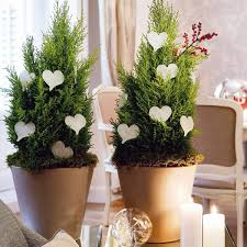 Home Decoration Plants Interior Design - Home decoration plants