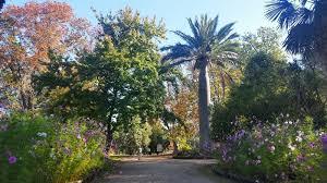 Kyneton Botanical Gardens Haired Amazona Macedon Ranges