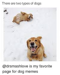 Dog Memes - 25 best memes about dog memes dog memes