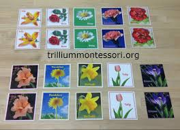 Montessori Bookshelves by Flower Activities For Montessori Or A Preschool Unit