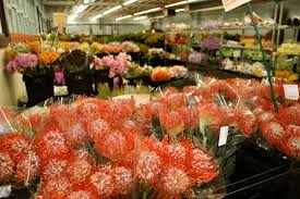 wholesale flowers flowers succulents wholesale