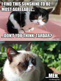 Meh Meme - 92 best pokey grumpy cat s bro images on pinterest brother