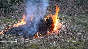 trimming pas grass using the burn method