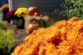 top 10 fall flowers for your autumn garden petal talk