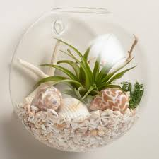wall mounted live plant glass terrarium world market