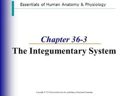 Human Anatomy Integumentary System The Integumentary System Ppt Download