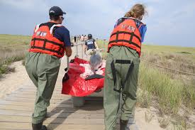 rescuers come to the aid of 10 stranded dolphins on cape cod the