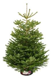 non drop 3 9ft trees uk