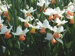 new bulbs for spring diy