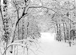 snowy tree covered path by finalrice on deviantart
