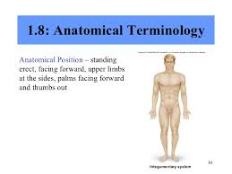 Human Anatomy Terminology Chapter 1 Introduction To Human Anatomy And Physiology