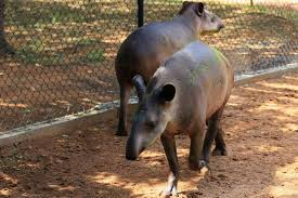 police believe thieves steal venezuela zoo animals to eat them