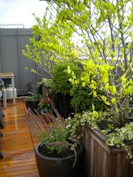 gardening rooftop garden design with bamboo fence terrace deck