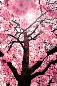 sweet red cherry blossom tree by yu uki on deviantart