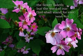 the flower fadeth free christian poster pictures bible verse