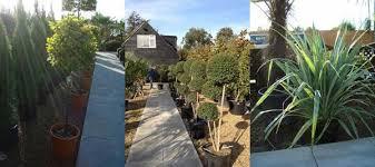 roof garden plants best plants to grow on roof terraces balconies or patios uk