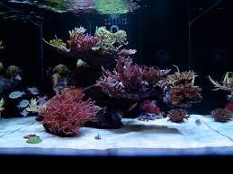 Floating Aquascape Reef2reef Saltwater And Reef Aquarium Forum - beautiful bonsai style minimalist reef aquarium reef cube