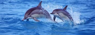 dolphin and whale trade top news international marine mammal