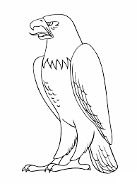 birds of prey coloring pages free printable coloring pages 16576