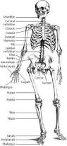 What Is Anatomy And Physiology Class 1 Human Anatomy And Physiology Course Learn About The Human Body