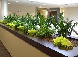 indoor plant arrangements plantasia portfolio interior exterior holiday floral arrangements