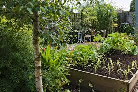 low maintenance low maintenance veg and fruit to grow gardenersworld com