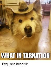 Head Tilt Meme - what in tarnation exquisite head tilt head meme on esmemes com